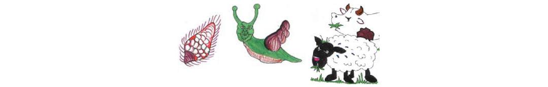 Parazitičtí ploštěnci – skupinová práce